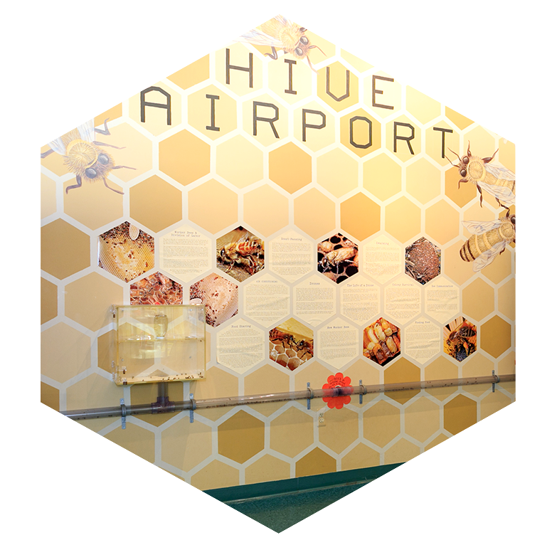 Insectropolis-Hive-Airport